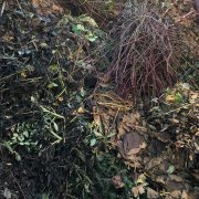 Informationen zur Verwertung von Grünschnitt und Gartenabfällen